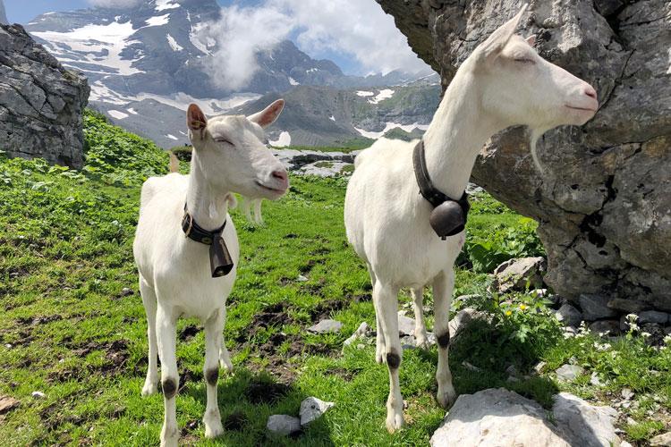Swisspecial - Private Guiding in Switzerland - Inquiry - Heidi Land