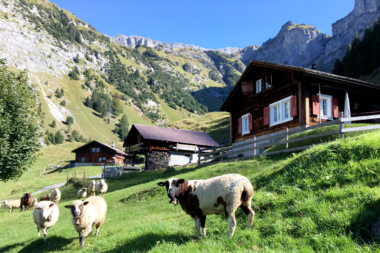 Swisspecial - Private Guiding in Switzerland - Trips - Heidi Land 5