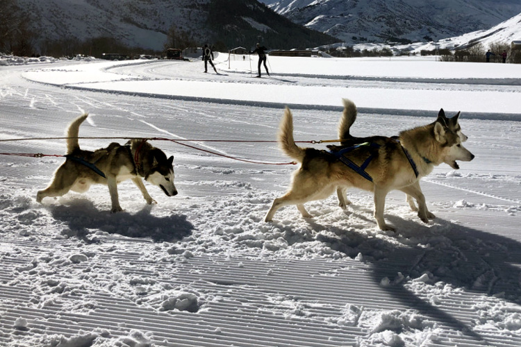 Swisspecial - Private Guiding in Switzerland - Trips - Husky Dream 3