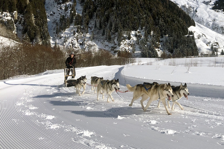 Swisspecial - Private Guiding in Switzerland - Trips - Husky Dream 5