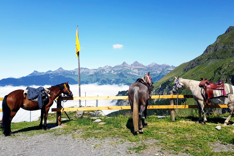 Swisspecial - Private Guiding in Switzerland - Trips - Mountain Horseback Ride 1