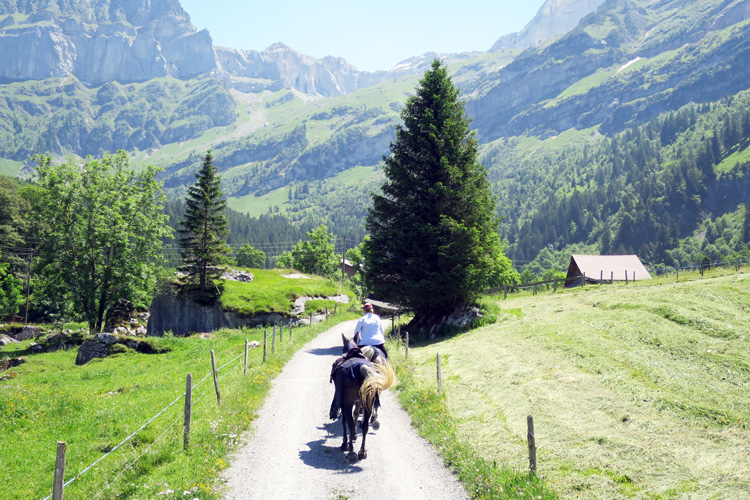 Swisspecial - Private Guiding in Switzerland - Trips - Mountain Horseback Ride 2