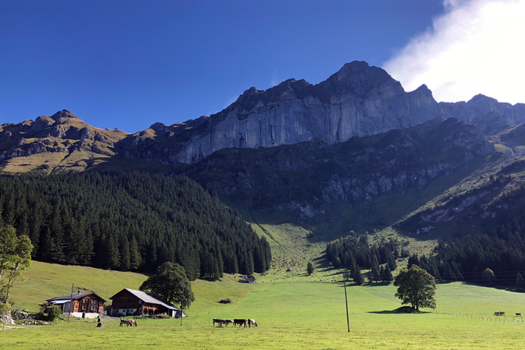Swisspecial - Private Guiding in Switzerland - Trips - Mountain Horseback Ride 5