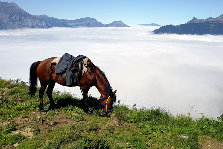 Swisspecial - Private Guiding in Switzerland - Trips - Mountain Horseback Ride