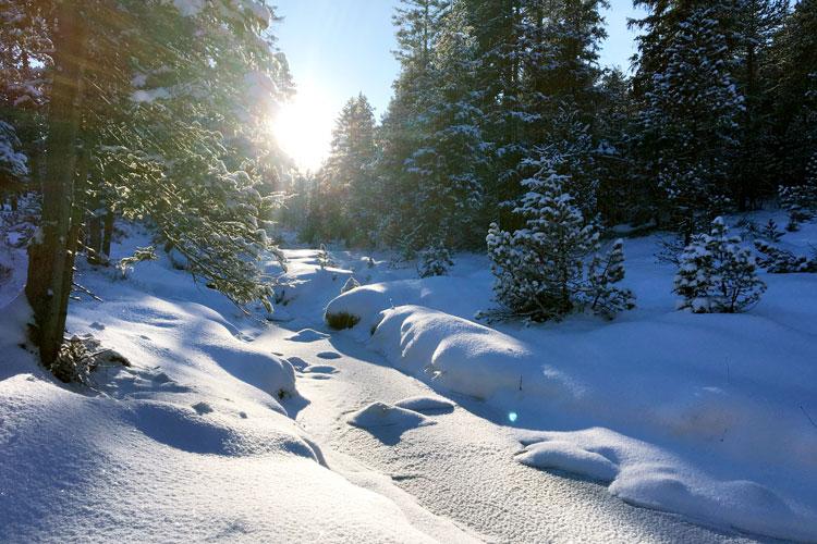 Swisspecial - Private Guiding in Switzerland - Trips - Winter Wonderland